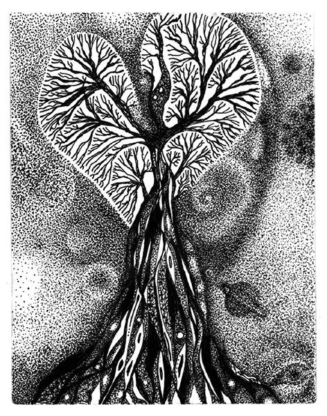 Sfraga Saga Blog - Raphael drawing by Barbara Sfraga