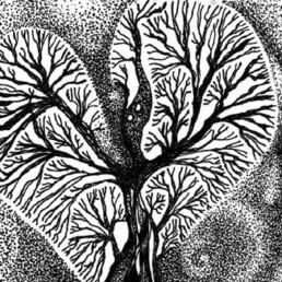SfragaSaga Blog - Raphael drawing by Barbara Sfraga